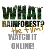 What Rainforest?